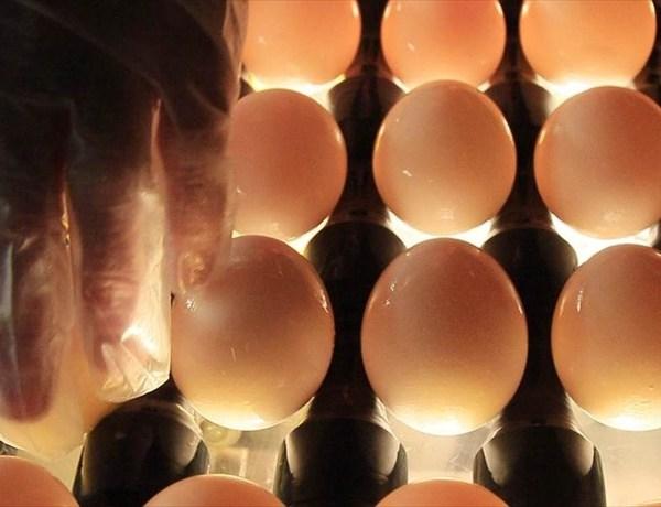 eggs_3004699305699658266
