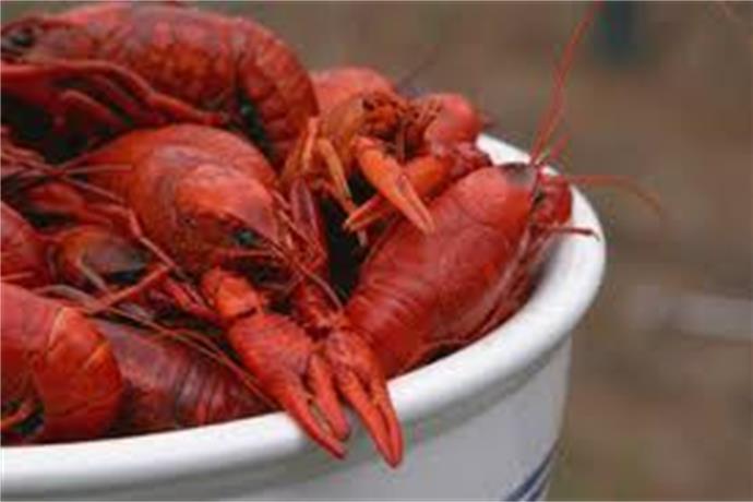 Crawfish Season Begins_-5562085806632908023