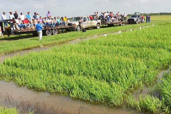 rice field_5518029241691163983