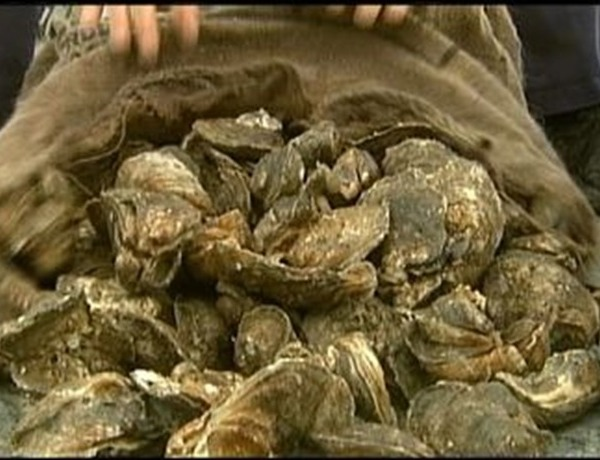 oysters_906506092837881889