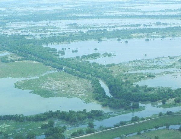 Louisiana Wetlands_90078716504654456