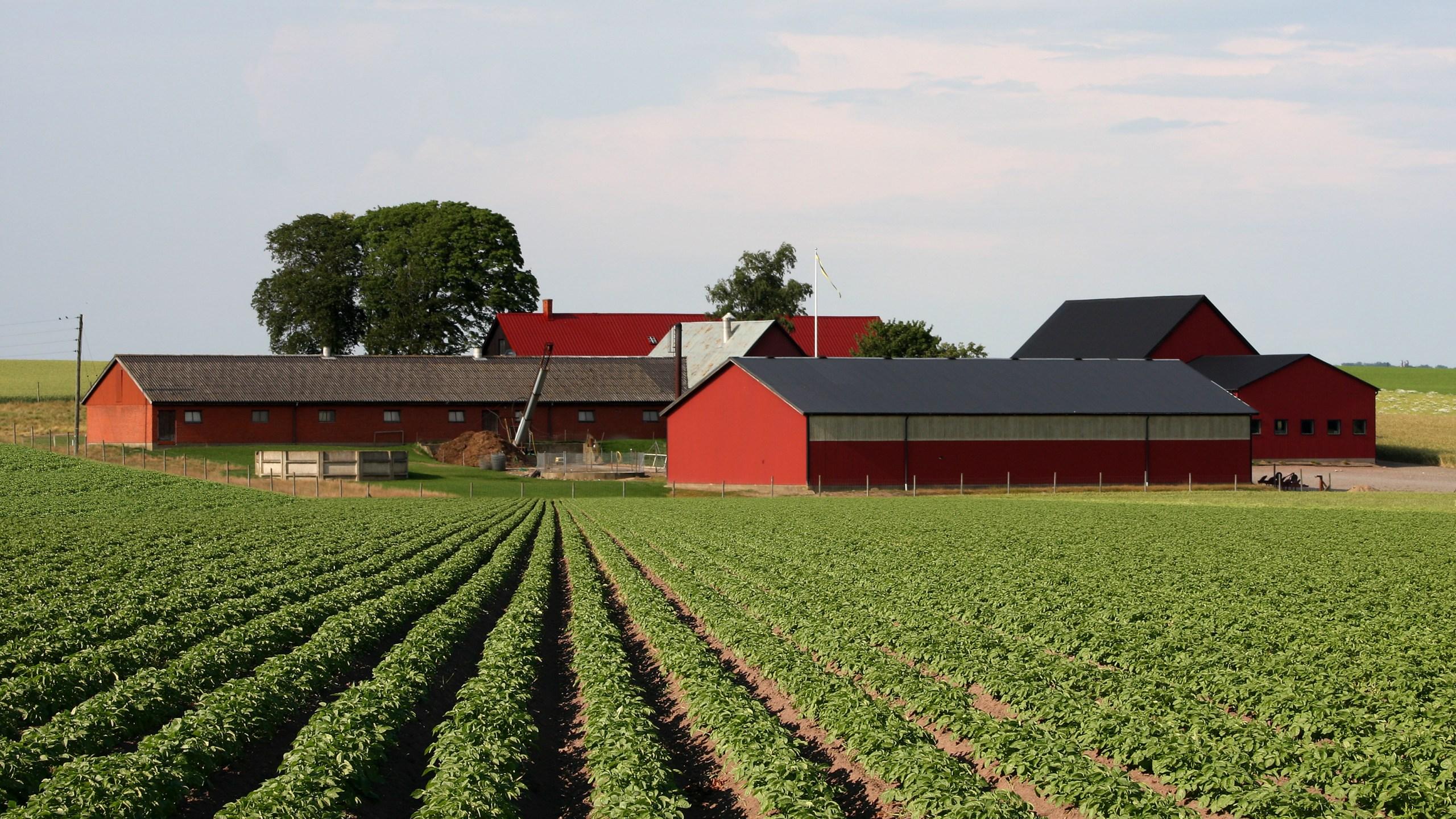 agriculture_1490106356323.jpg