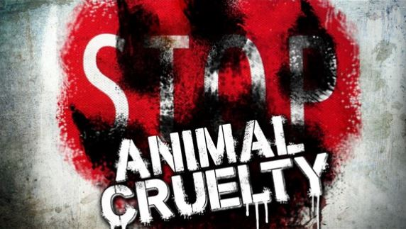 animal cruelty1_1500041178514.JPG
