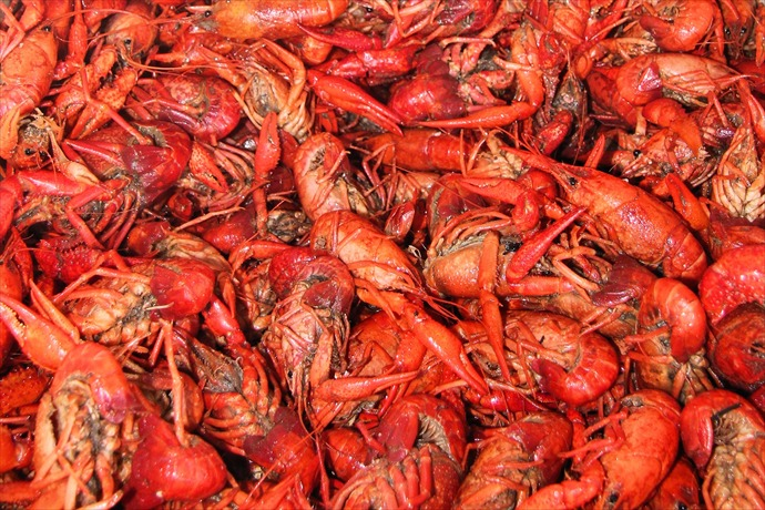 crawfish_1512496809011.jpg
