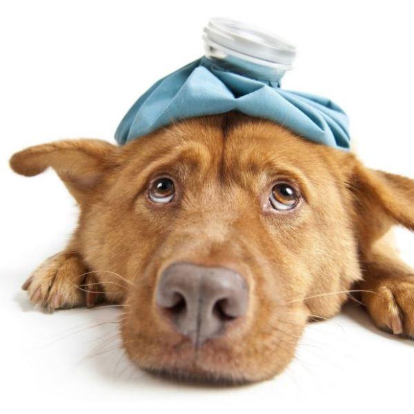 Sick dog_1516984885903.JPG.jpg