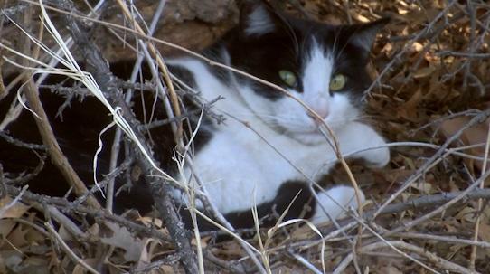 stray cats_1533165468692.jpg.jpg