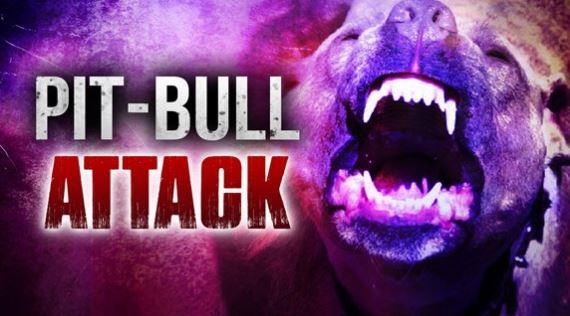 pit bull attack_1539099086774.JPG.jpg
