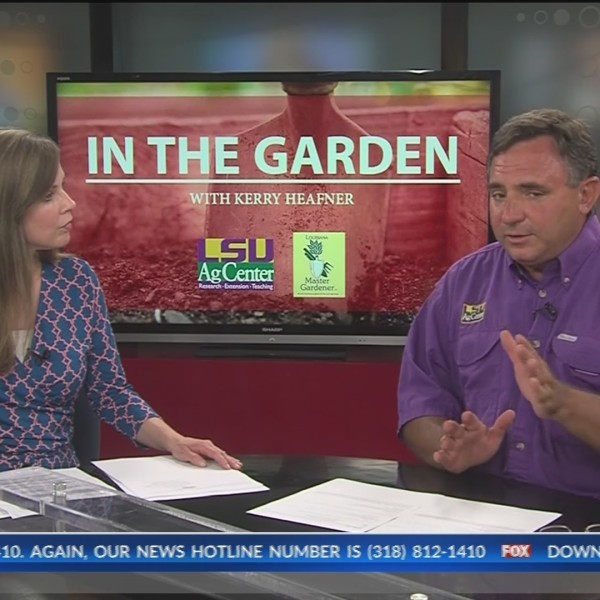 In the Garden: Hiring a lawn service