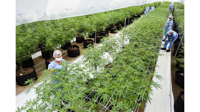 Uruguay Latin America Europe Medical Marijuana_1559803880244
