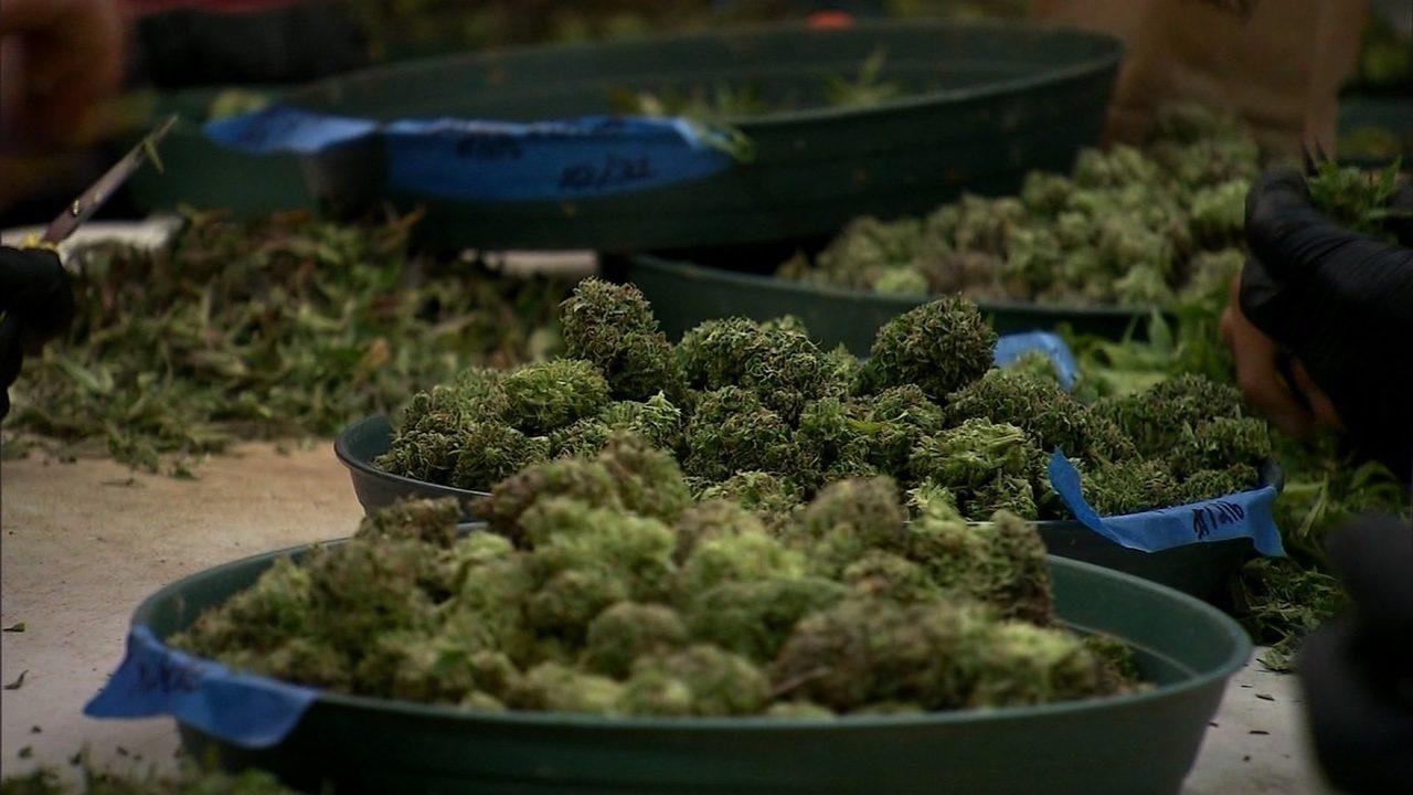 cannabis_1560996045508.jpg
