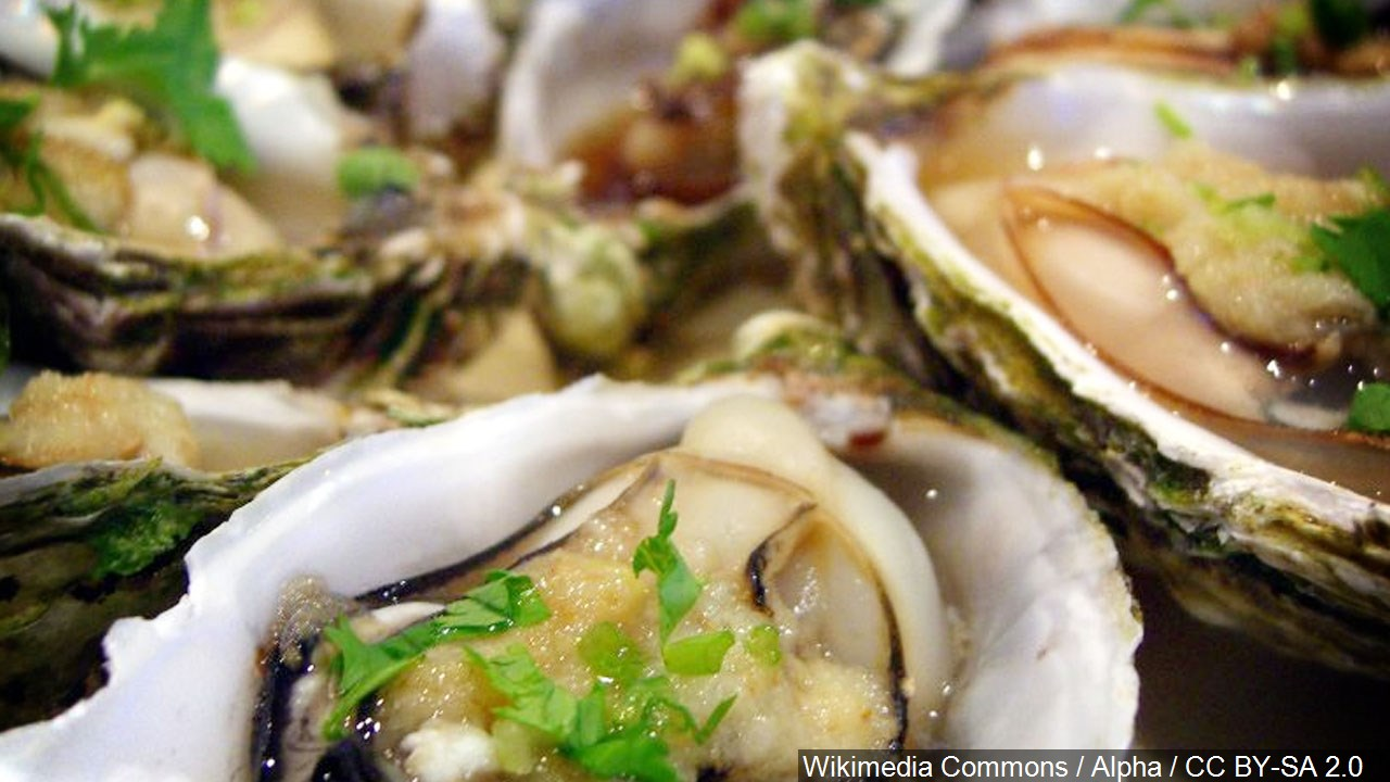 oysters_1559943411443.jpg
