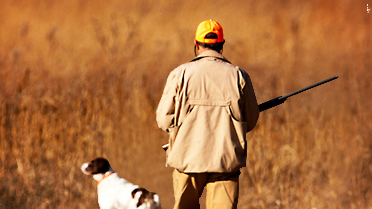 Duck Hunter Fined k for Violating Hunting Laws